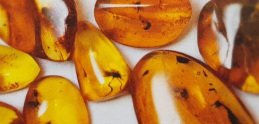 Amber: Copenhagen Amber Museum
