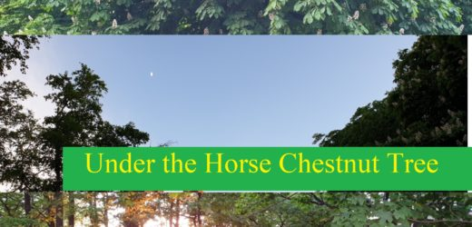 Under the Horse Chestnut Tree